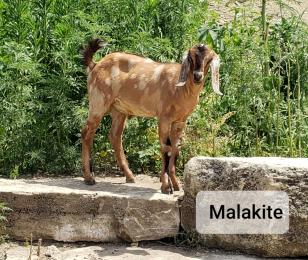Malakite